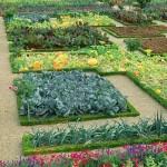 Vegetable-Garden-Layout1