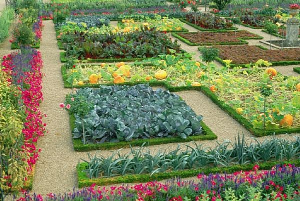 Vegetable gardens for Beautiful vegetable garden designs